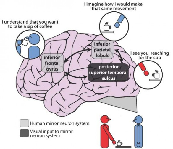 mirror neuron system in the human brain which has been implicated in the impaired ability to imitate experienced by many patients with schizophrenia